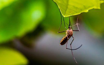 Repele insectos de forma natural – Ecoinventos