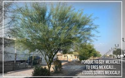 ¡Qué bella y verde la Obregón! – Todos Somos Mexicali